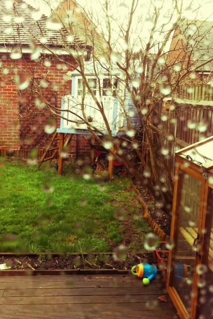 Sunday wet garden