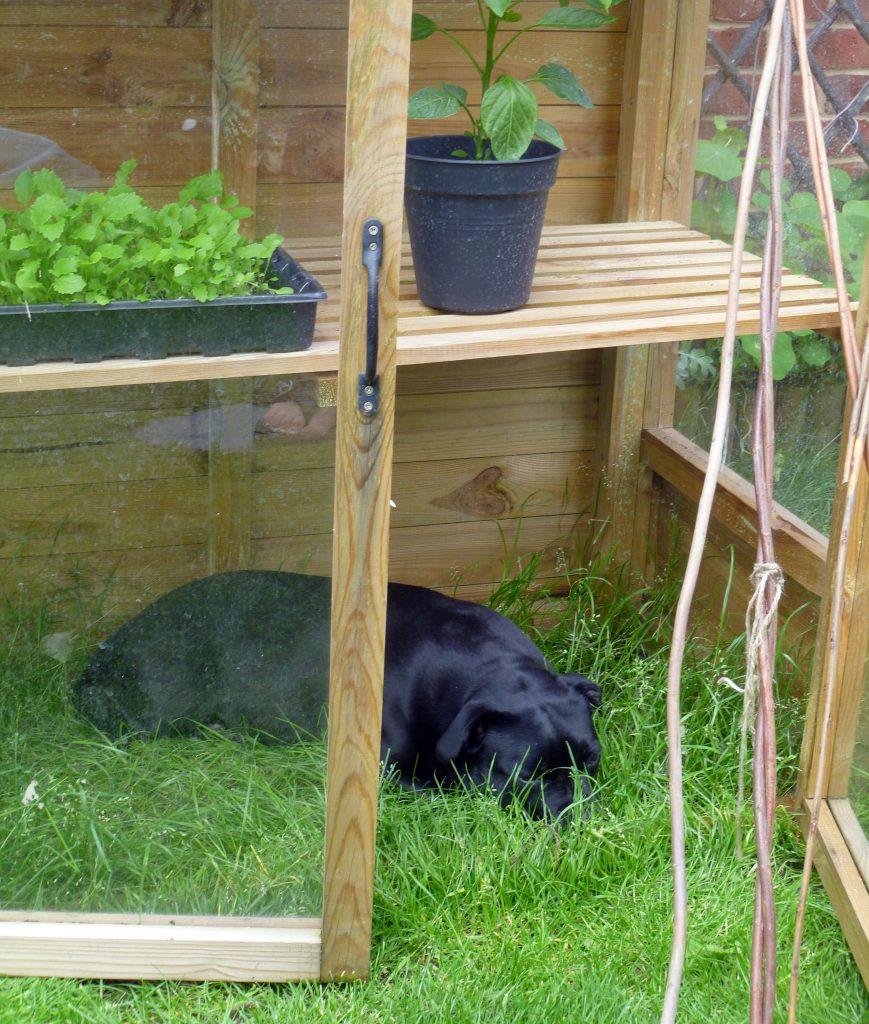 Sunday greenhouse dog