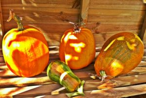 Pumpkins in the Sunday sunshine