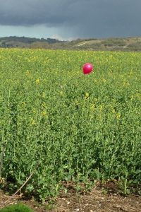 balloon in field