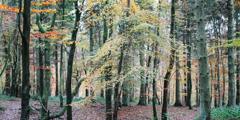 See the wood for the trees with effective governance and processes